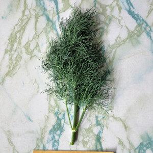 Anethum Graveolens (erbe spontanee) - Erbario Civran