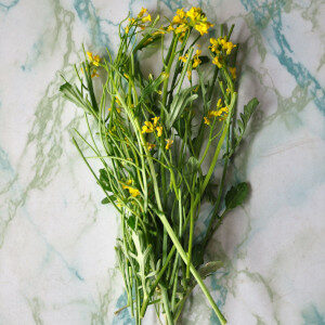 Barbarea Vulgaris (erbe spontanee e fiori eduli) - Erbario Civran