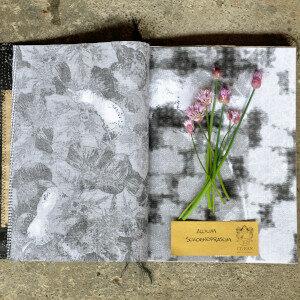 Erbario Civran - Allium Schoenoprasum (fiori eduli)