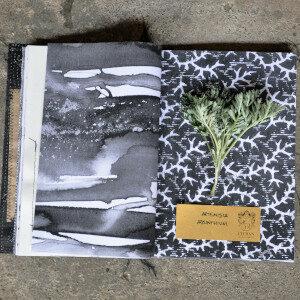 Erbario Civran - Artemisia Absinthium (erbe spontanee)