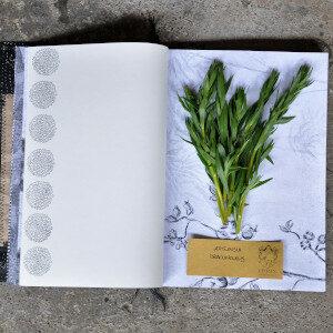 Erbario Civran - Artemisia Dracunculus (erbe spontanee)