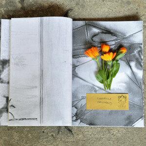 Erbario Civran - Calendula Officinalis (fiori eduli)