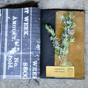 Erbario Civran - Rosmarinus Officinalis (erbe spontanee e fiori eduli)