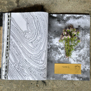 Erbario Civran - Thymus (erbe spontanee e fiori eduli)