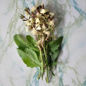 Eruca Vesicaria (fiori eduli) - Erbario Civran