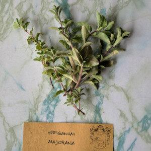 Origanum Majorana (erbe spontanee) - Erbario Civran