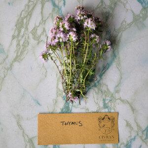 Thymus (erbe spontanee e fiori eduli) - Erbario Civran