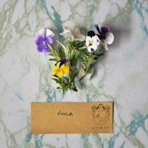 Viola (fiori eduli) - Erbario Civran